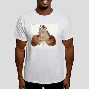 Heart anatomy, 19th Century illustra Light T-Shirt