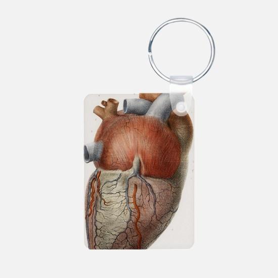 Heart anatomy, 19th Centur Keychains
