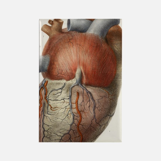 Heart anatomy, 19th Century illus Rectangle Magnet