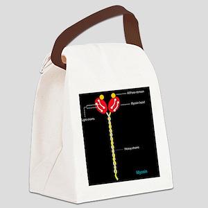Myosin structure, artwork Canvas Lunch Bag