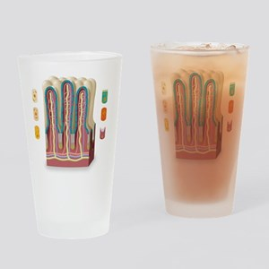 Intestinal villi anatomy, artwork Drinking Glass