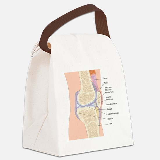Knee joint anatomy, artwork Canvas Lunch Bag