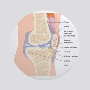 Knee joint anatomy, artwork Round Ornament