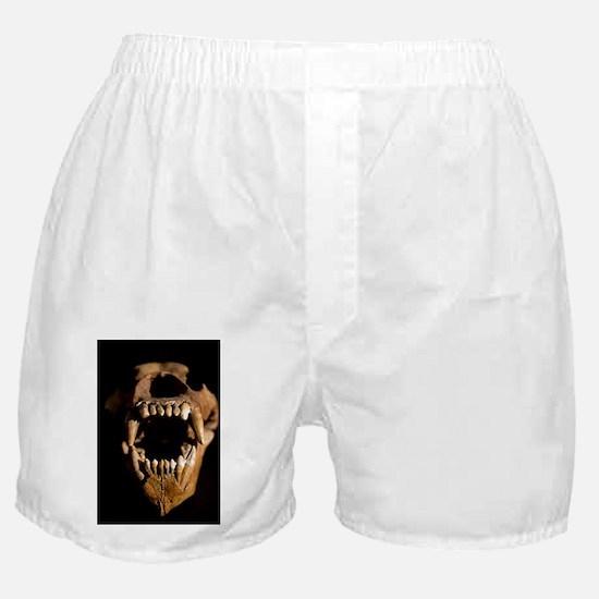 Ural Cave bear skull Ursus uralensis Boxer Shorts
