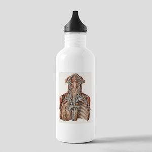 Neck anatomy, 19th Cen Stainless Water Bottle 1.0L