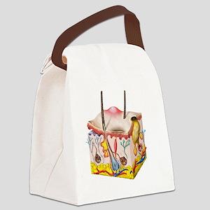 Skin anatomy Canvas Lunch Bag