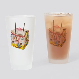 Skin anatomy Drinking Glass