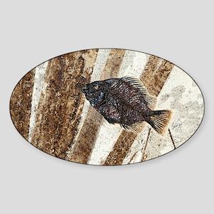 Priscacara fossil fish Sticker (Oval)
