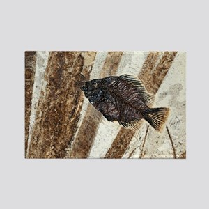 Priscacara fossil fish Rectangle Magnet