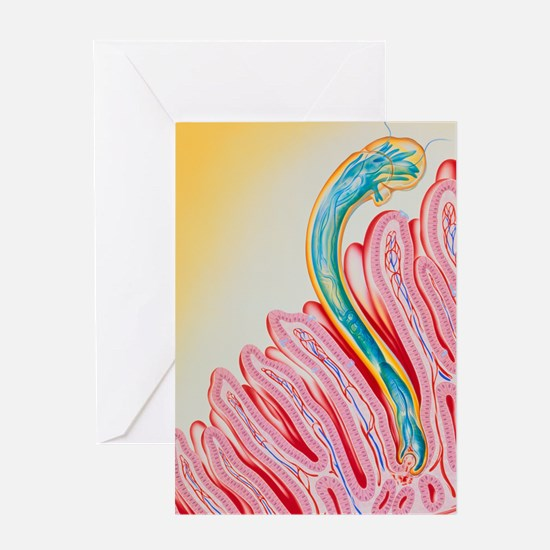 Artwork of hookworm clinging to inte Greeting Card