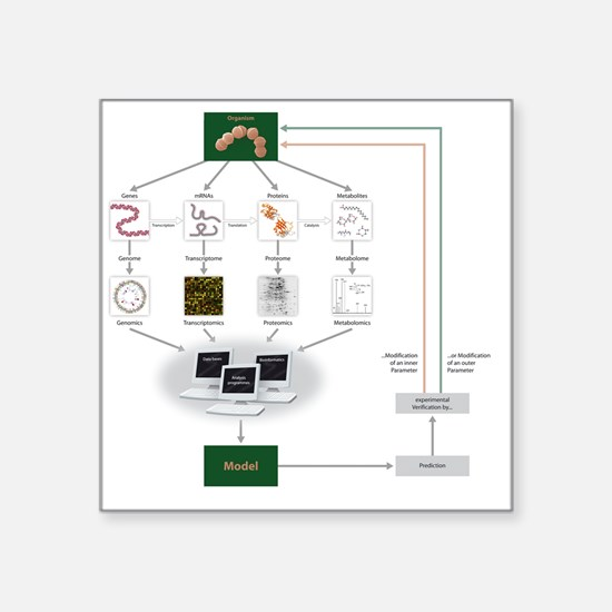 """Systems biology, flow chart Square Sticker 3"""" x 3"""""""