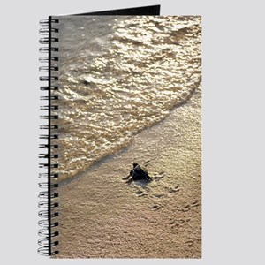 Green turtle hatchling Journal