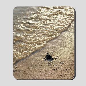 Green turtle hatchling Mousepad