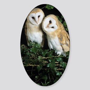Barn owls Sticker (Oval)