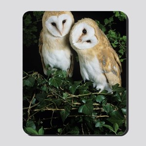 Barn owls Mousepad