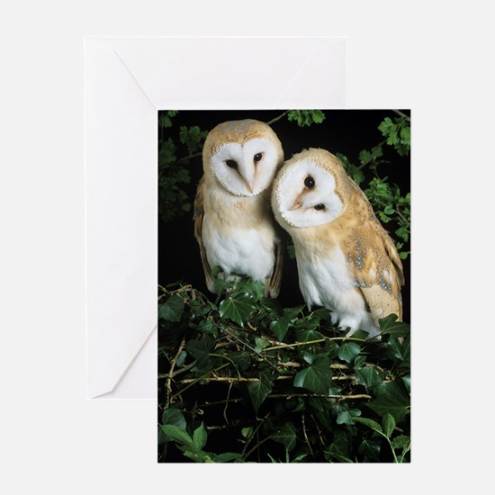 Barn owls Greeting Card