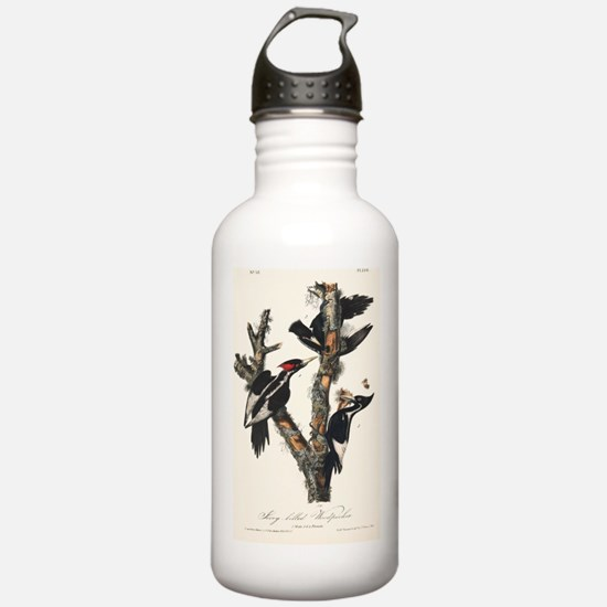 Ivory-billed woodpecke Water Bottle