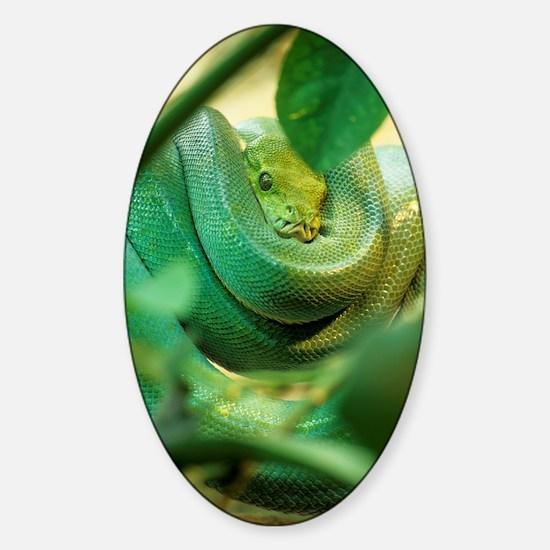 Green tree python Sticker (Oval)