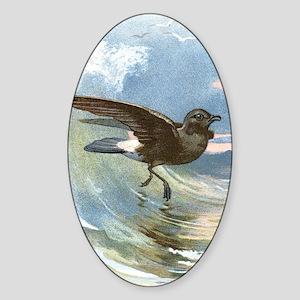 Storm petrel, historical artwork Sticker (Oval)