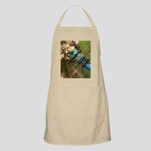 Male emperor dragonfly Apron