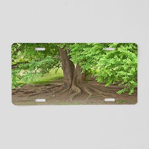 Old man tree Aluminum License Plate