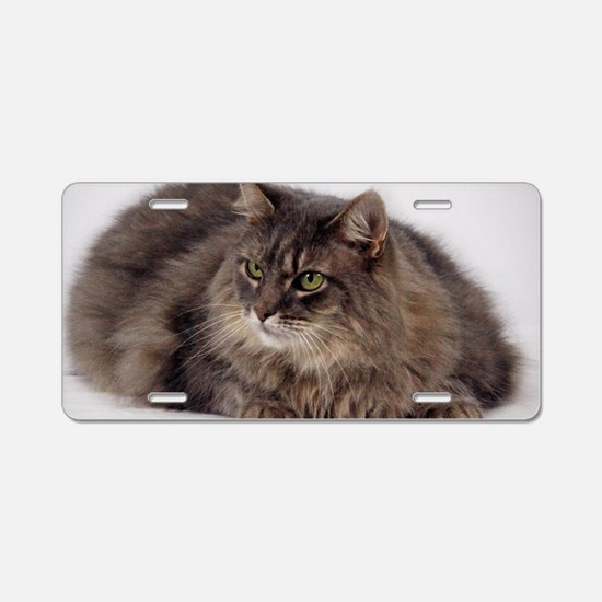 Maine Coon Aluminum License Plate