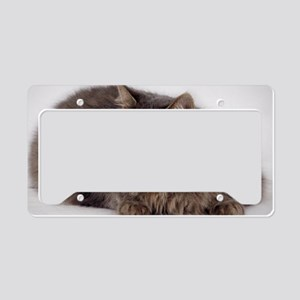 Maine Coon License Plate Holder