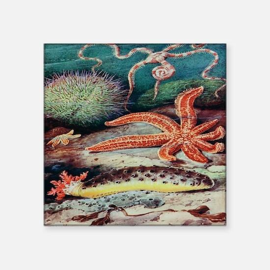 "Vintage Sea Creatures Square Sticker 3"" x 3"""