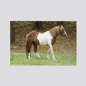 Wild Painted Horse Rectangle Magnet