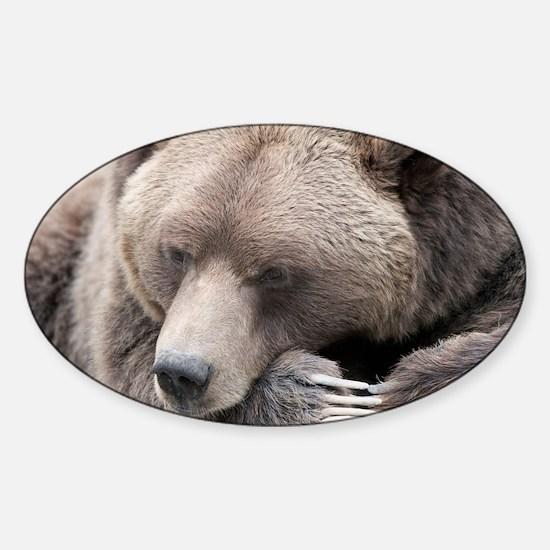 Lazy grizzly Sticker (Oval)