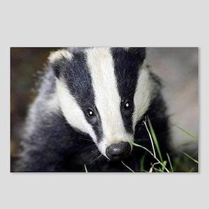Cute Badger Postcards (Package of 8)
