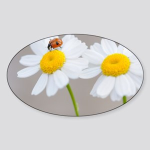 Daisy Ladybug Sticker (Oval)