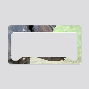 Black Rhino 3x5 Rug License Plate Holder