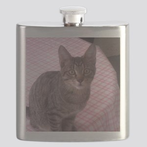 Beautiful Tabby Flask