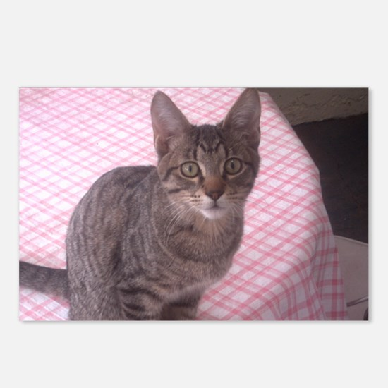 Beautiful Tabby Postcards (Package of 8)