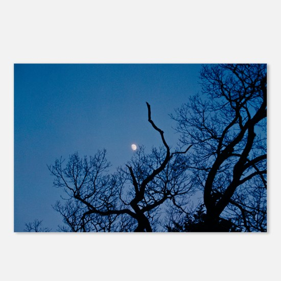 Catch the Moon Postcards (Package of 8)