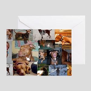 Red nose Gator Brindle Amstaff Greeting Card