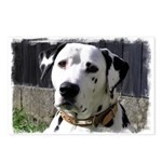 ...Dalmatian 03... Postcards (Package of 8)