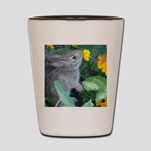 baby bunny Shot Glass
