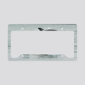 Dolphin Splash License Plate Holder