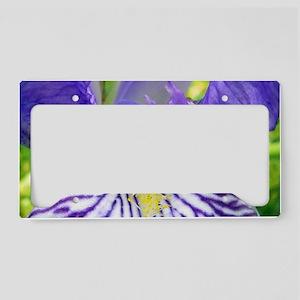 Purple Bearded Iris Monsignor License Plate Holder