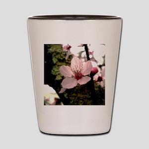 Cherry Blossom, 1 Shot Glass