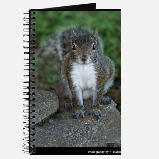 Just Plain Nuts - Digital Photography Journal