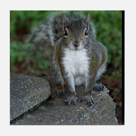 Just Plain Nuts - Digital Photography Tile Coaster