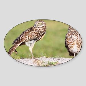Owl Stretch Sticker (Oval)