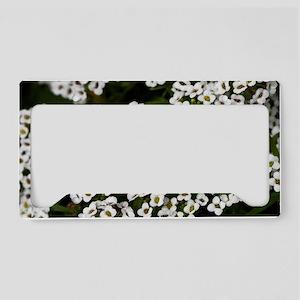 White Alyssum 14x6 License Plate Holder