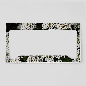 White Alyssum 12x8 License Plate Holder