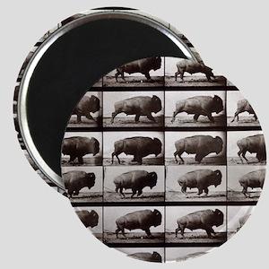 Tiny Buffalo Magnet