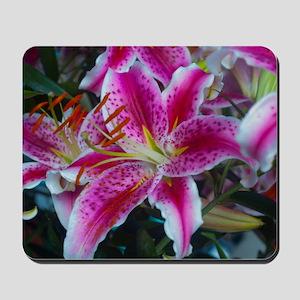 Stargazer Lily Large Framed Print-3000hx Mousepad