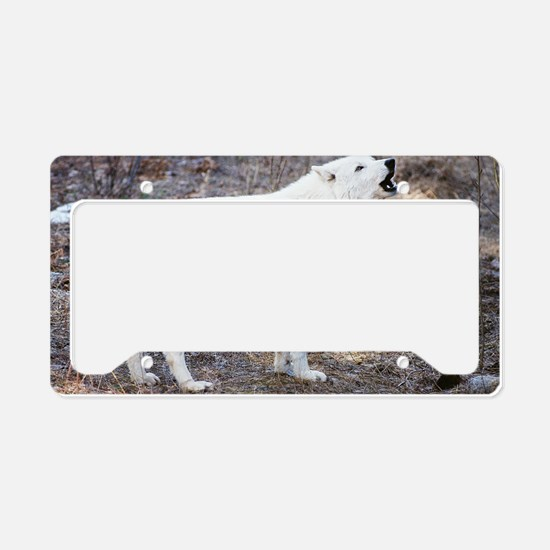 lost wolf license plate holder - Wolf Picture Frames